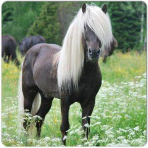 Hästfoder