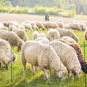 elnät till får