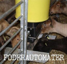 foderautomater till får