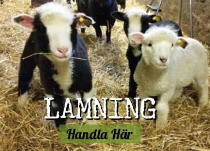lamning